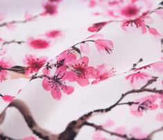 Seamless-sakura-pattern_comment_674891_thumb
