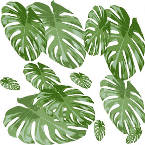 Tropical Palm Elephant leaf in greens Botanical Print