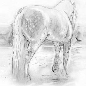 Custom Gypsy Horse BW 15y
