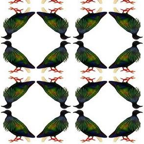 Nicobar pigeon 1