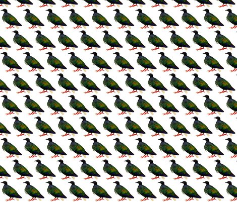 Rrnicobar_pigeon_-_1_shop_preview