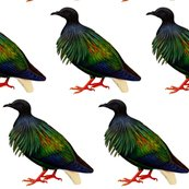 Rrnicobar_pigeon_-_1_shop_thumb