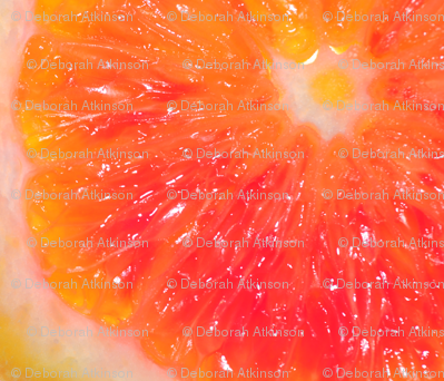 Snowcatcher Orange