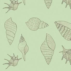Seashells pale green by Sara Aurora Waters
