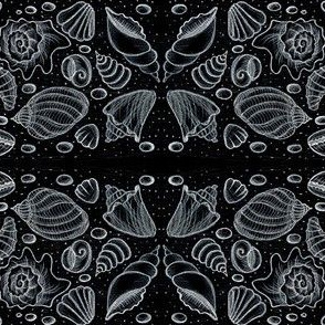 Shells - chalk drawing
