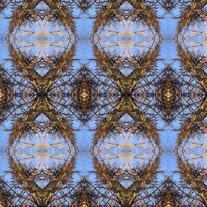 Honey Locust Tree Thorns
