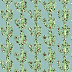 Delicate Cactus