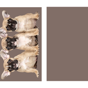 Frenchy Puppies Pillow / Cushion Template