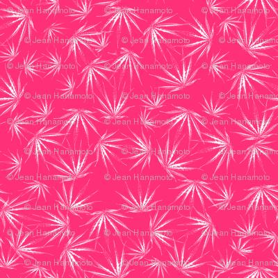Hot Pink Sativa