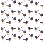 Blue Wrens Russet on White