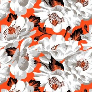 Mount Cook Lily - Orange/White