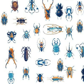 Beautiful Beetles in Blue and Orange