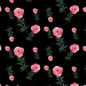 Red Roses Garden Black