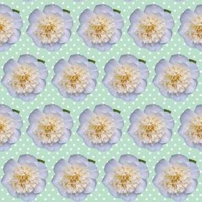 Camellia on green & white spotty