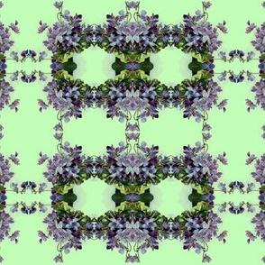 Sprig Of Violets