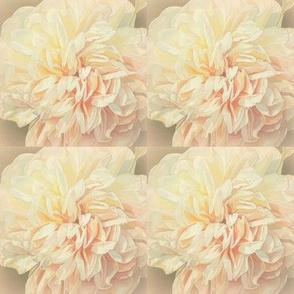 Cream Celebration Wedding Roses