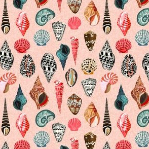 shells // summer beach nautical shells seashell seaside