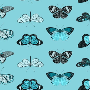 Butterflies - 2 Direction Repeat - Blue and Black