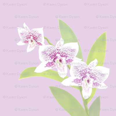 Orchid Trio - Lavender Pink 150