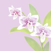Rpillow-20-light-orchids-lavender_shop_thumb