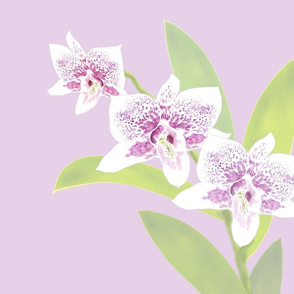 Orchid Trio - Lavender Pink 150