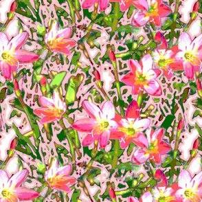 Pink Crocus 2