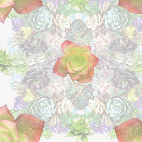 R_succulents_300_x_6000