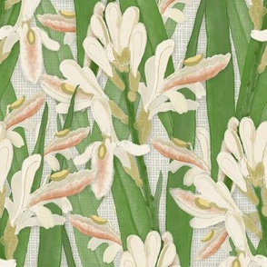 Cardarmon_in_flower