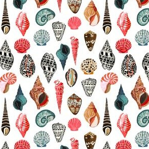 shell // shells seashell ocean nautical summer kids ocean creature