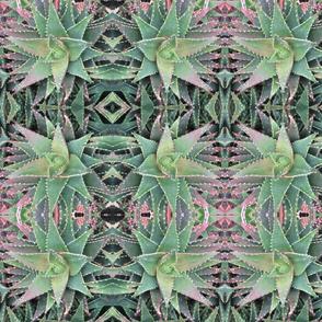 Garden of Aloes
