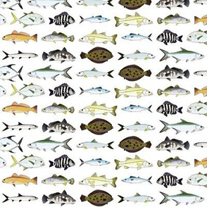 Florida Inshore Fishes 2 row