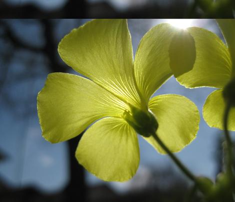 Floral Radiance fabric by jpmorrow on Spoonflower - custom fabric