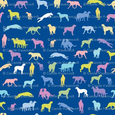 Scottish Deerhounds BLUE