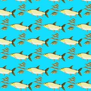 Giant Tigerfish attacks Cichlids