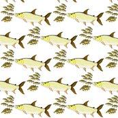 Rtigerfishcichlids_shop_thumb