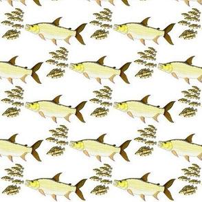 Giant Tigerfish attacks Jewel Cichlids
