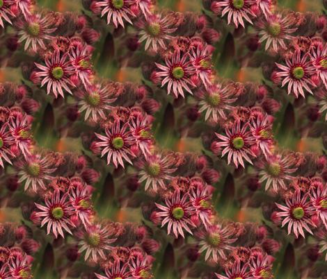 Grande Joubarbe  fabric by ellie_jo on Spoonflower - custom fabric