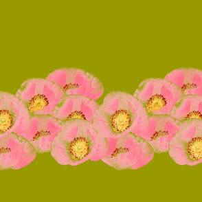 Pink Corn Poppies