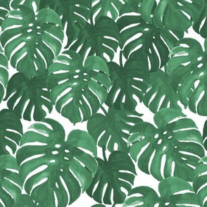 Monstera Cheese Plant Painted Tropical Palms Botanical Palm Springs Trendy Plants Cactus Succulents