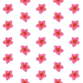 pink flowers painted florals blooms blossoms florals floral flowers pink