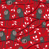Monkey tree red