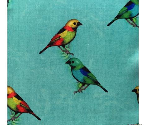 Forest Trip Coordinate (Birds)