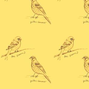 Yellow Tree Sparrow & Yellow Hammer by Sara Aurora Waters