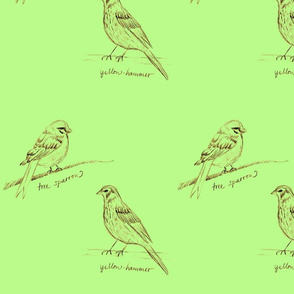 Green Tree Sparrow & Yellow Hammer by Sara Aurora Waters