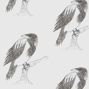 Grey Crow by  Sara Aurora Waters