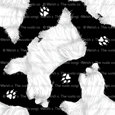 Trotting Maltese and paw prints - black