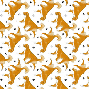 Trotting Nova Scotia duck tolling Retriever and paw prints - white