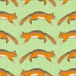 Forest Trip Coordinate (Squirrels)