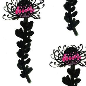 Black Pincushion Protea
