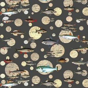 Fish Speak Grey